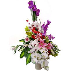 Danang Flowers Gifts | Haiphong flowers | Send flowers to Hai Phong